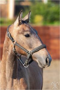 Photo cheval a vendre PAPRIKA DE LA GESSE